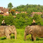 Travel Well with Gayatri Bhaumik