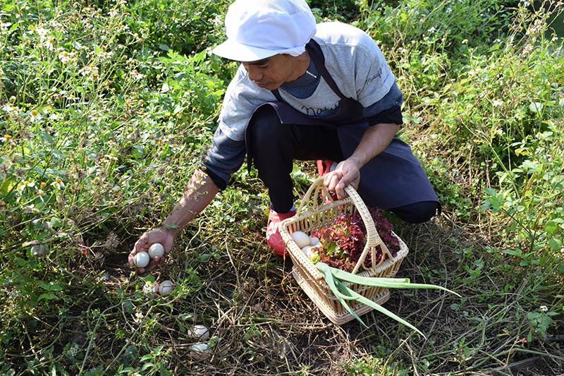 museflower-retreat-spa-chiang-rai-egg-hunting-duck-farm-photo-credit-laure-stevens-lubin-copy