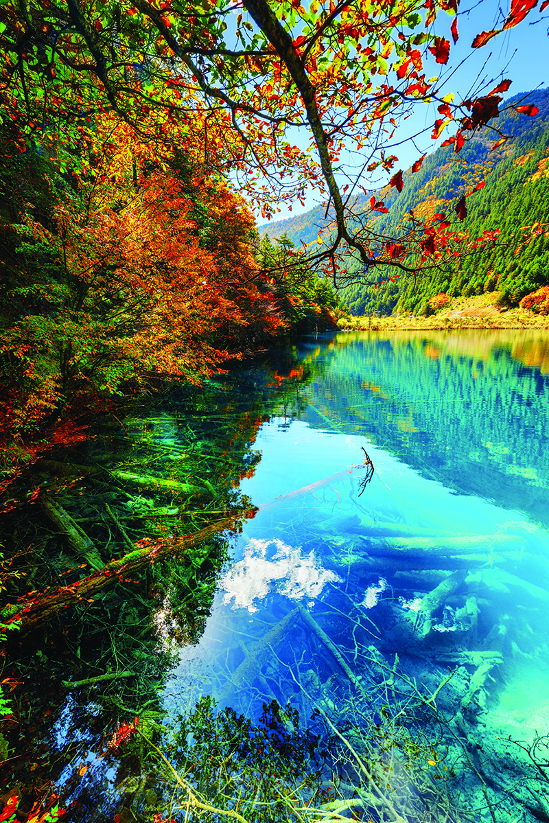 Fantastic autumn landscape. Amazing lake with azure crystal clear water among colorful fall woods in the Shuzheng Valley, Jiuzhaigou nature reserve, China. Submerged tree trunks are visible in water.