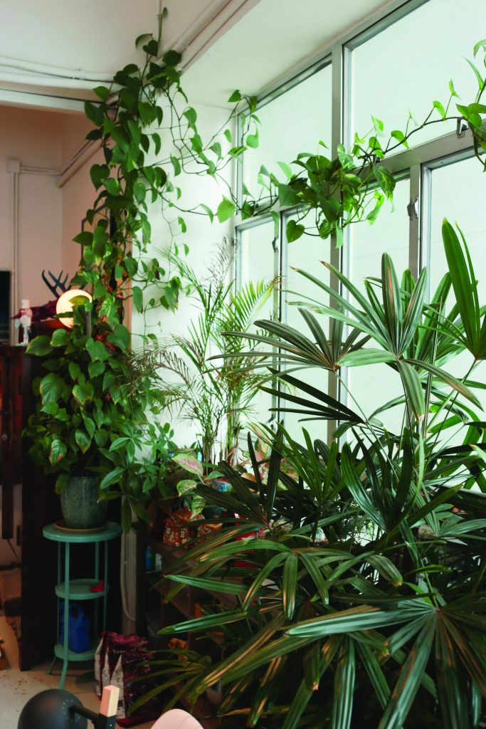 Several green plants in Thierry Chow's apartment in Hong Kong.