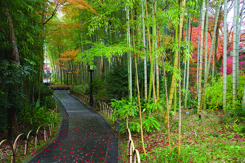 A part of the Izu Geo Trail, a health and wellness option for people visiting Tokyo.