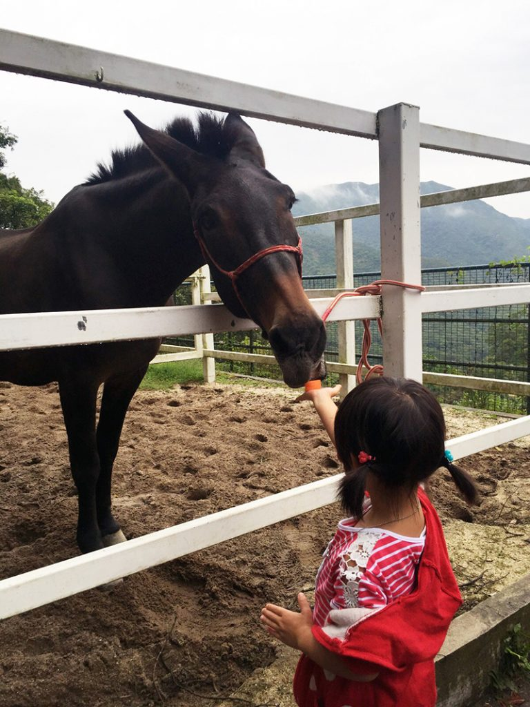 A small girl feeds a horse at Kadoorie Farm, a family friendly wildlife sanctuary in Hong Kong.
