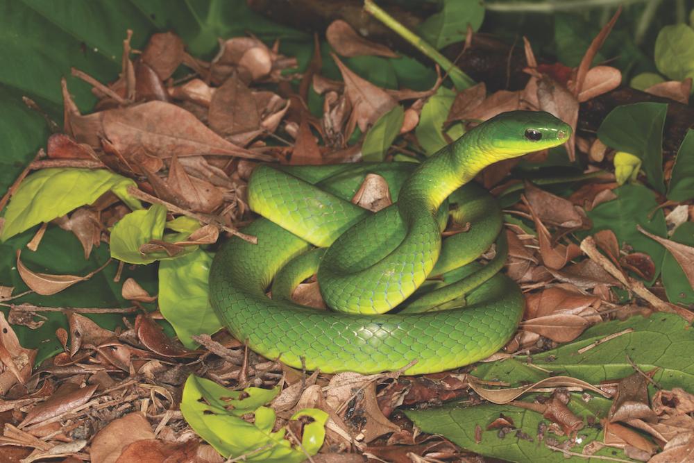 Hong Kong Walking Tours Snake Safari