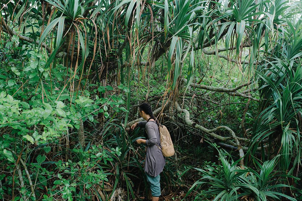 hong kong nature tours - kembali