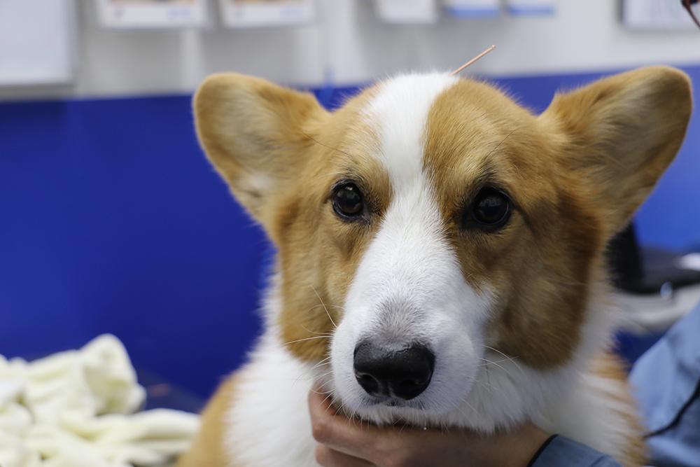 Why Alternative Pet Wellness is Trending in Hong Kong   Liv